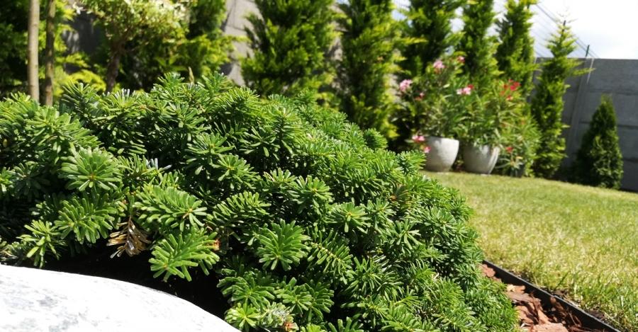 kertész árak